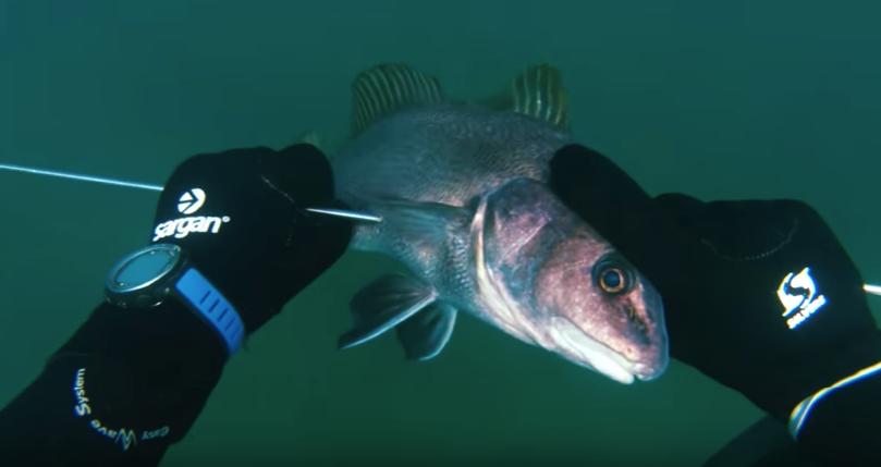 подводная охота Крым