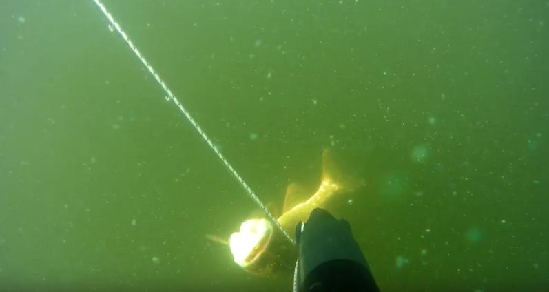 подводная охота на глубине