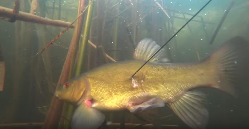 Подводная охота Коми