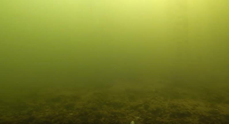 карп в мутной воде