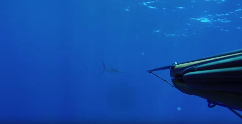 охота в индийском океане