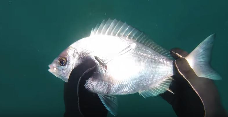 соренования по подводной охоте
