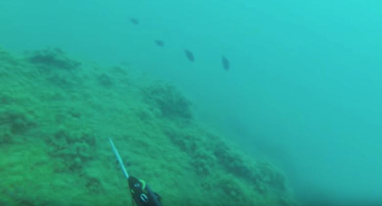 охота в море