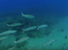 Подводная охота, это сложно или нет?