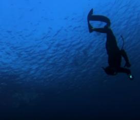 Как начать тренироваться в бассейне. Подводная охота для начинающих