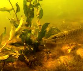 Как, когда и где начать заниматься подводной охотой