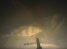 Подводная охота в марте. Поиск трофея