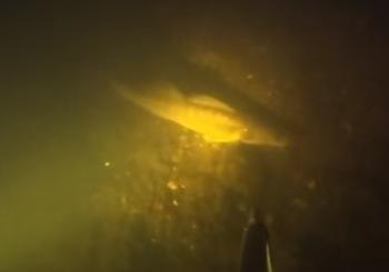 Подводные обитатели ночной Волги