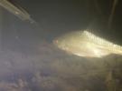 Ноябрьская подводная охота на небольшой реке