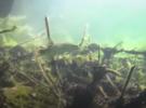 Подводная охота на Новониколаевском карьере