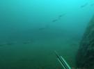 Подводная охота в Крыму в конце октября
