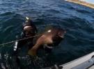 Почему подводные охотники не видят горбыля?