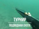 Праздник окуня. Турнир по подводной охоте
